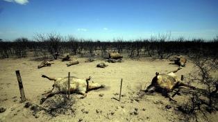 Cambio climático: comienzan conversaciones virtuales a nivel mundial