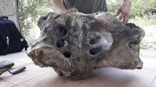 Paleontólogos, entusiasmados con el primer hallazgo de fósiles de un perezoso gigante
