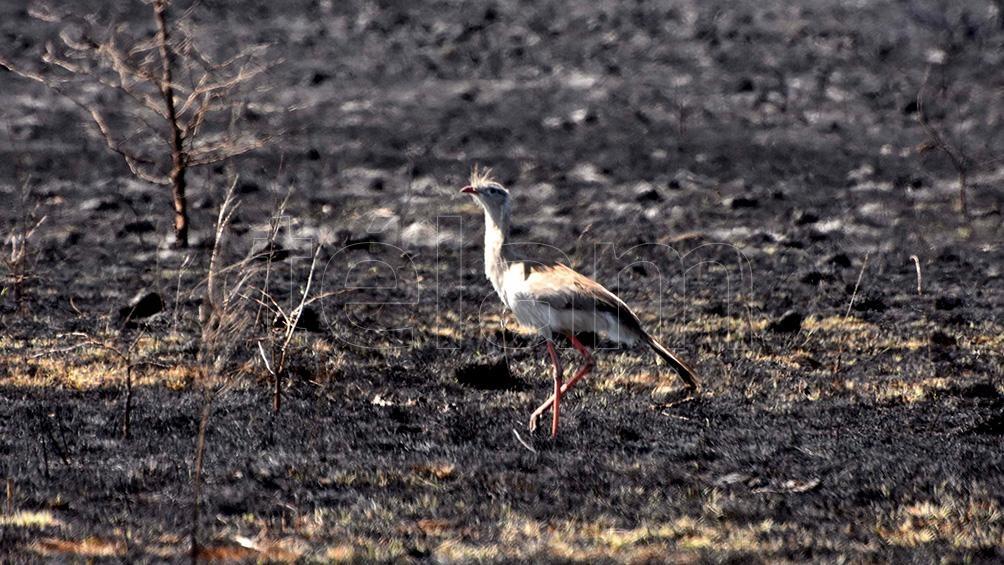 Ante la tierra arrasada, las especies animales y vegetales quedaron en riesgo.