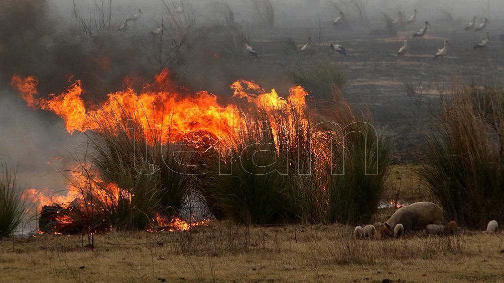 Río Negro, Buenos Aires y Santa Cruz informaron incendios forestales activos
