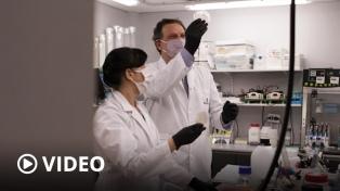 La Anmat autorizó el suero equino para el tratamiento de coronavirus