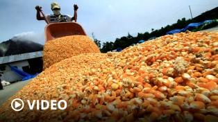 Suspenden temporalmente el registro de exportación de maíz para asegurar abastecimiento interno
