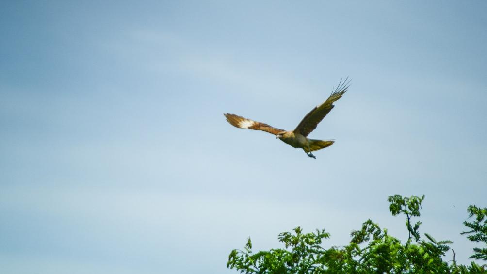 Avistaje de aves, una de las propuestas para la Rserva de Santa Catalina.