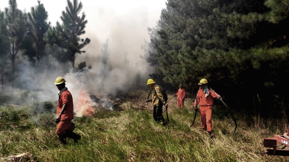 El 95% de los incendios son generados por acciones humanas.