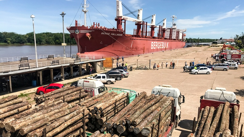 China bajó aranceles para bienes de madera, por lo que se espera mayor producción forestal nacional