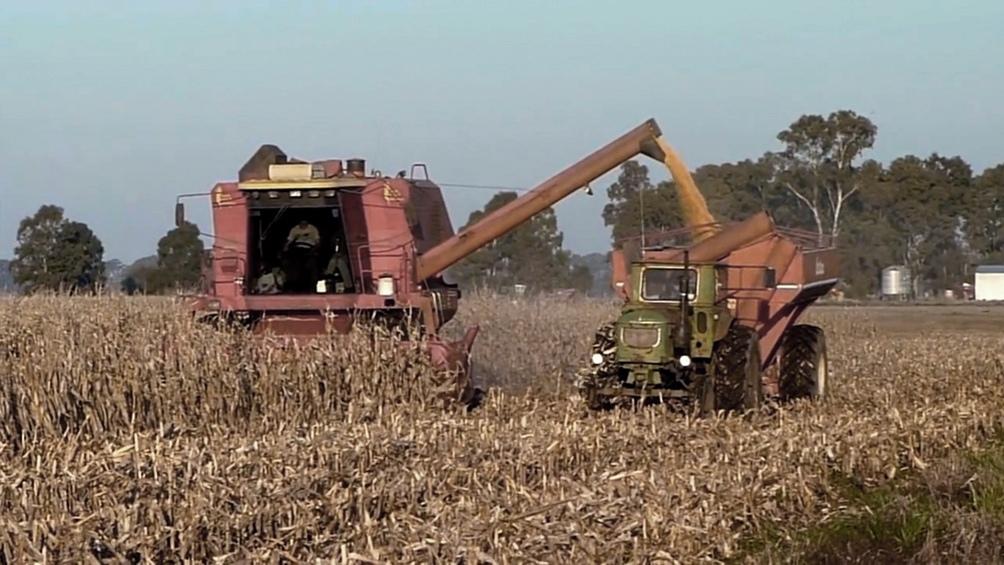 """La cartera agropecuaria sostuvo en un comunicado que """"no existe limitación ni cepo a la exportación de maíz, cuando la Argentina alcanzó un récord de exportación"""