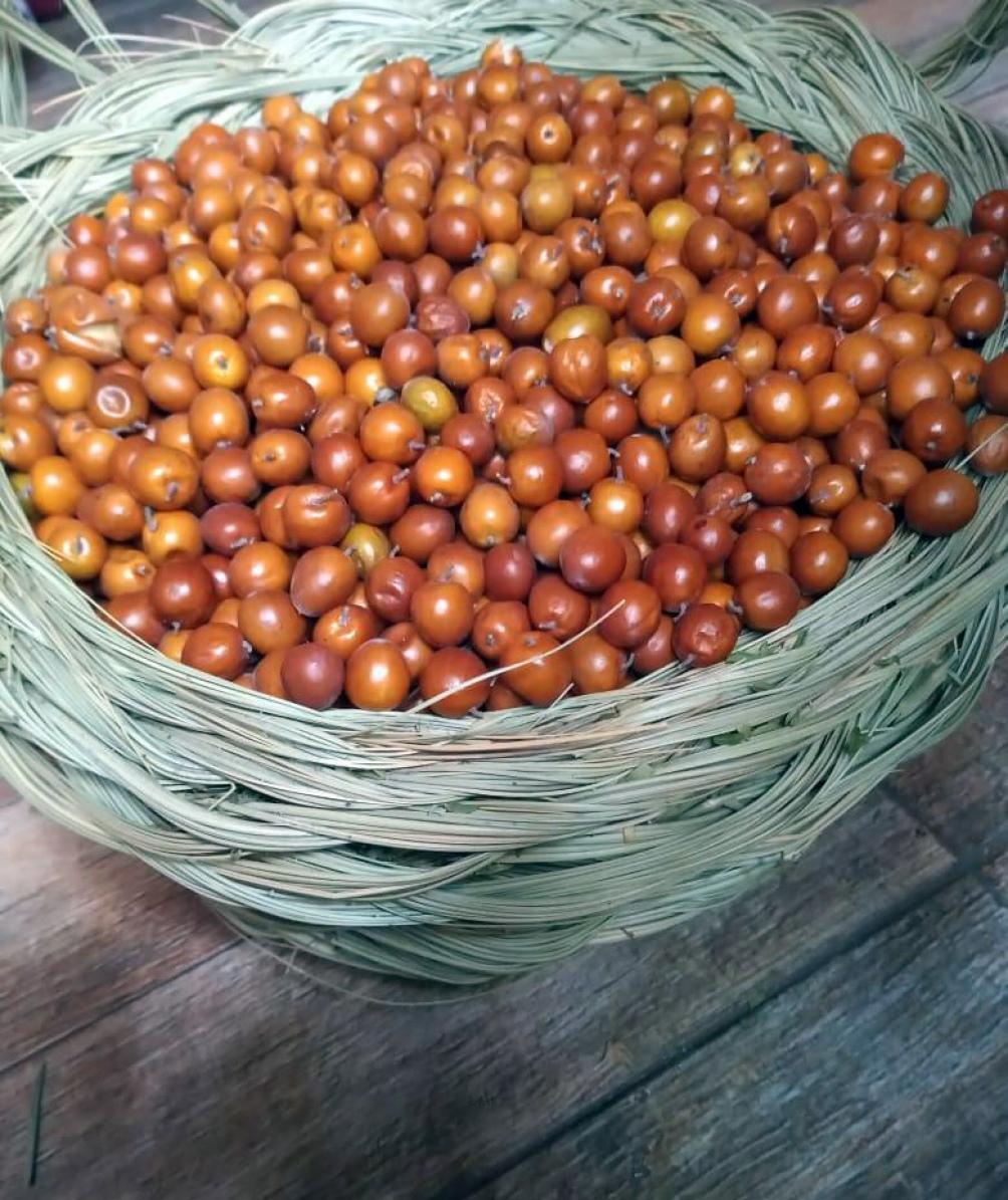 """Los frutos, a través de procesos artesanales, """"serán convertidos en harinas, licores, arropes e infusiones""""."""