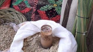 Los huarpes pynkanta iniciaron tiempo de recolección de frutos y plantas sagradas