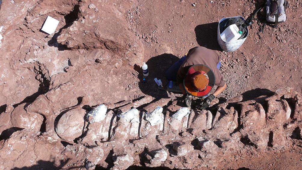 Según las estimaciones de los palentólogos, el ejemplar rondaría los 40 metros de largo.