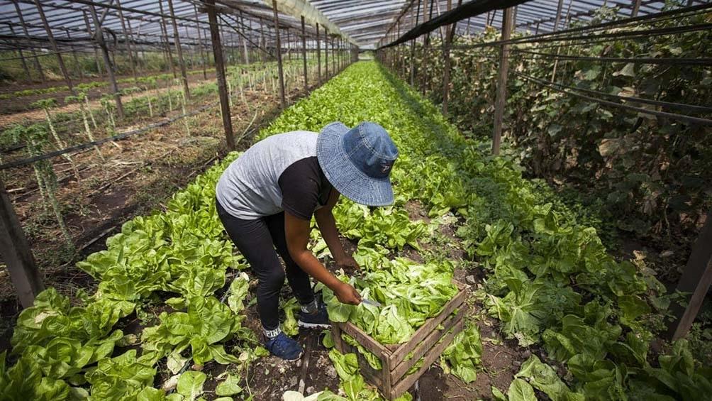 """Martins: La idea de """"ir hacia un tipo de agricultura que sea complementaria y que tenga que ver con alguna de las demandas mundiales de productos orgánicos hay que atenderla""""."""