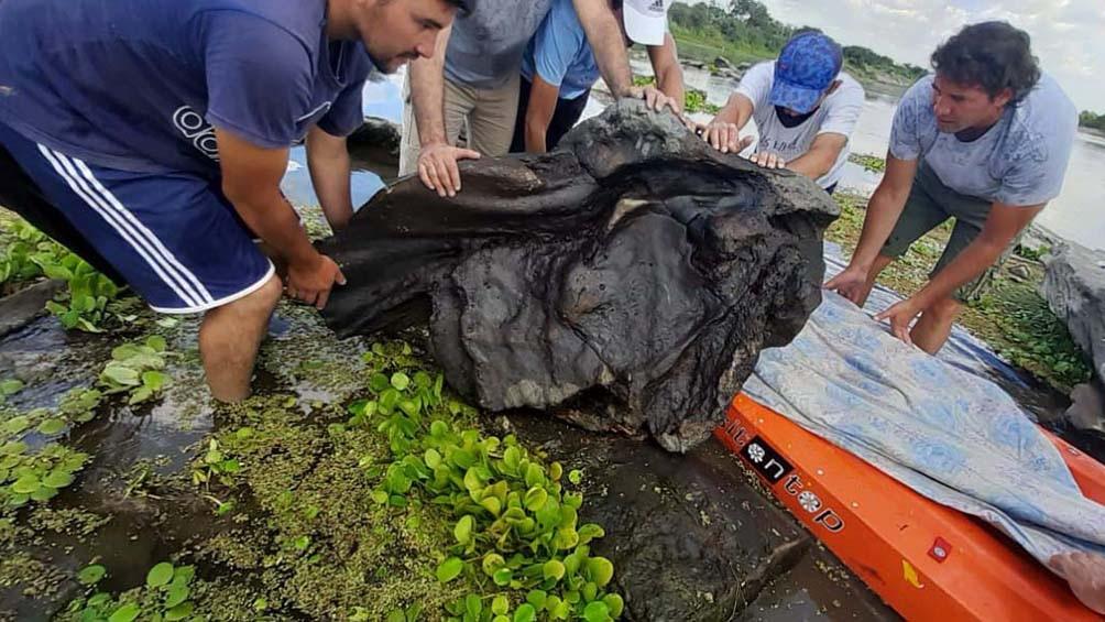 Santiago del Estero: el hallazgo de un gliptodonte sorprende a los investigadores