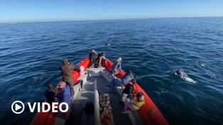 Los delfines fueron los protagonistas del fin de semana en Puerto Madryn