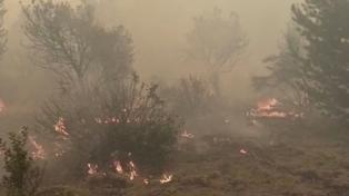 Continúan los incendios en Cuesta del Ternero en Río Negro y en Los Lagos en Neuquén