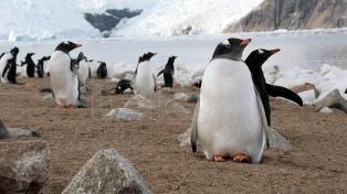 """La """"Fiebre blanca"""" que genera la Antártida del libro al podcast"""