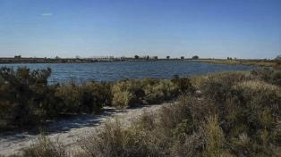 Investigan la muerte de peces en una laguna de Mendoza