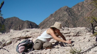 Hallan una nueva especie de rincosaurio de 230 millones de años de antigüedad