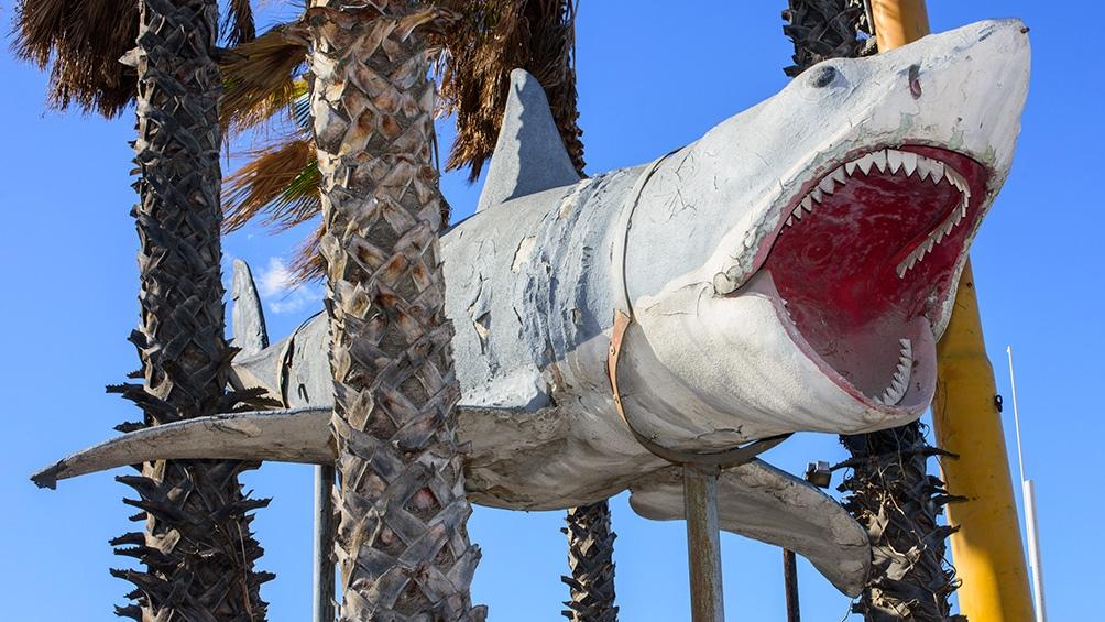 """""""Tiburón"""", en escala real"""