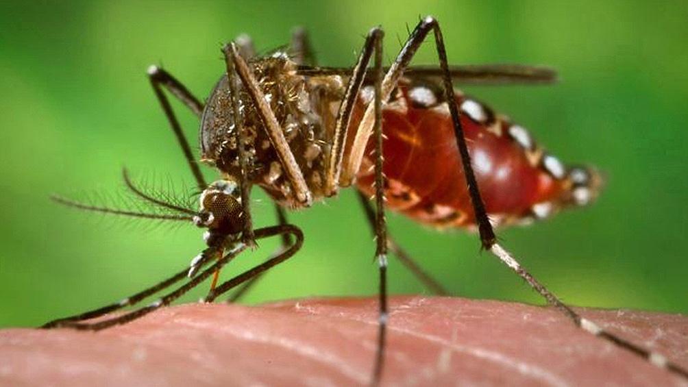 Desde el 28 de junio del año pasado hasta la semana del 21 al 27 de marzo del 2021 se notificaron en la Ciudad 482 casos de dengue.