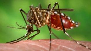 Temporada de dengue: bajaron los casos, pero se debe continuar con la prevención