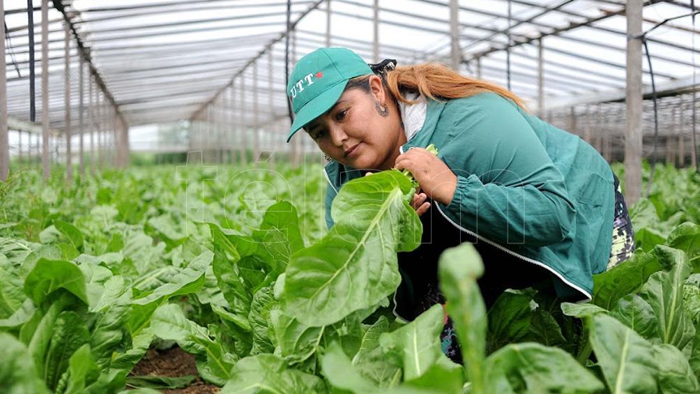 """""""Al igual que la tierra que cultivamos, las mujeres damos frutos, damos vida"""""""
