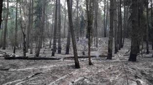 Unos 70 bomberos trabajan para apagar un incendio en la reserva de Cariló