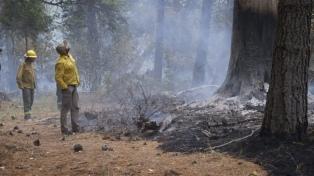 Planifican la restauración de los bosques afectados por los incendios
