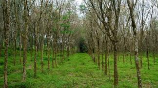 La Administración de Parque Nacionales declaró de Interés Institucional la campaña.