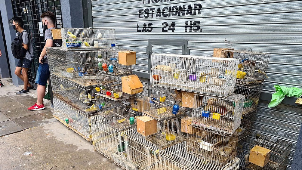 Desbaratan un criadero ilegal y rescatan a 300 aves de especies exóticas en Villa Luro.