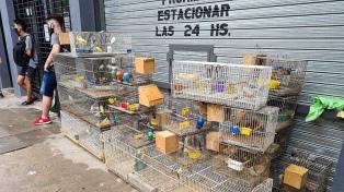 Desbarataron un criadero ilegal y rescataron a 300 aves de especies exóticas