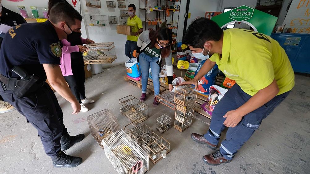 El tráfico de fauna es una de las principales actividades ilícitas del mundo.