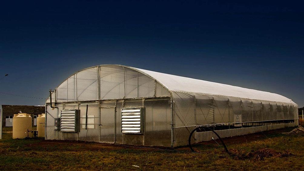 El área de cultivo cuenta con seguridad, cámaras e iluminación necesarias para la producción.