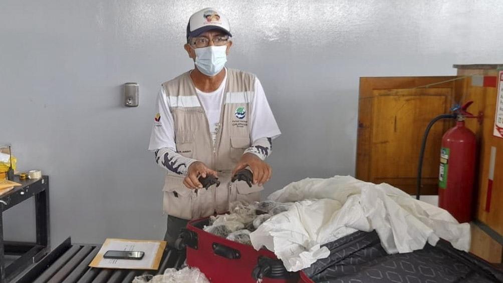 Descubren una valija con 185 tortugas en el aeropuerto de las Islas Galápagos