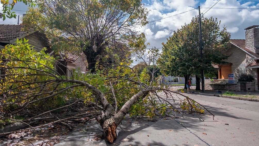 El vendaval produjo caídas de árboles y voladuras de techos.