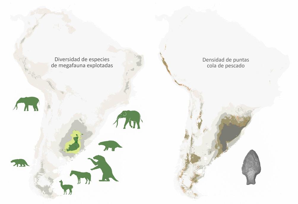 Investigadores del Conicet en la Facultad de Ciencias Naturales y Museo de la Universidad Nacional de La Plata determinaron que el efecto directo de la depredación humana fue el principal factor que generó la extinción de la megafauna en Sudamérica
