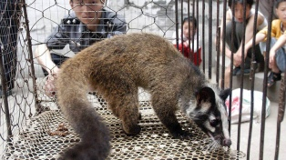 La OMS pidió suspender la venta de mamíferos salvajes vivos en los mercados por los riesgos sanitarios