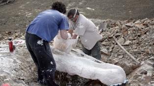 Revelan diferencias entre machos y hembras en un reptil marino de 70 millones de años de antigüedad