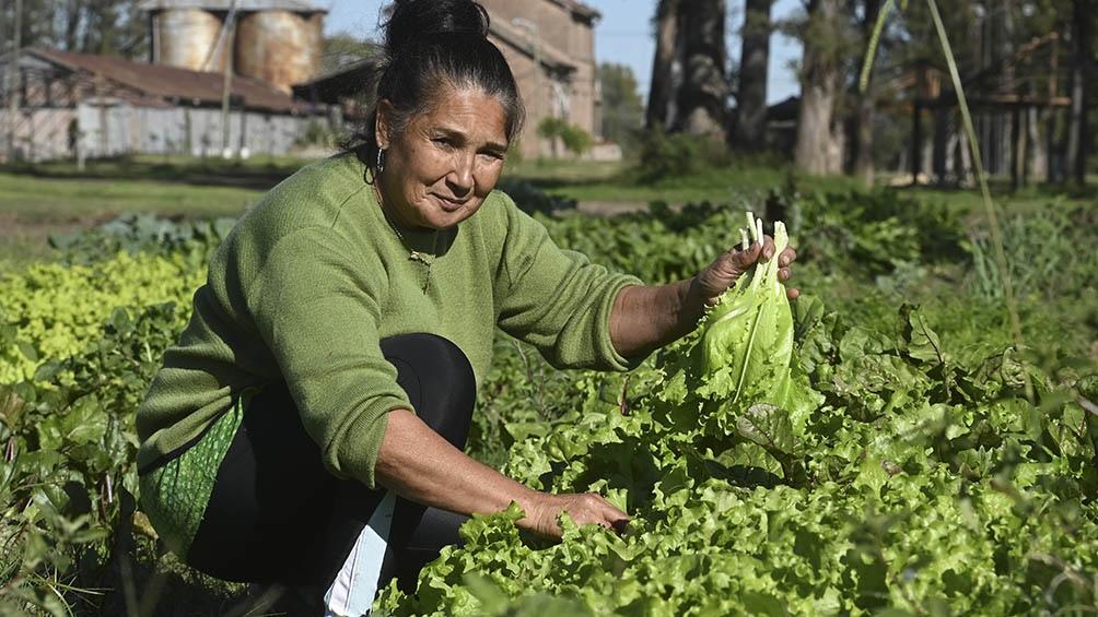 SemillAR registró más de 500 experiencias en todo el país, de familias y de organizaciones que producen, multiplican y conservan semillas.