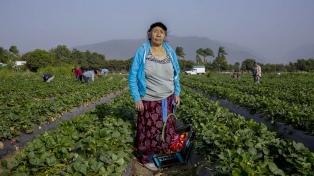 Pondrán en marcha un plan de promoción y protección del trabajo rural registrado