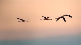 Crearán un nuevo parque nacional en Miramar de Ansenuza