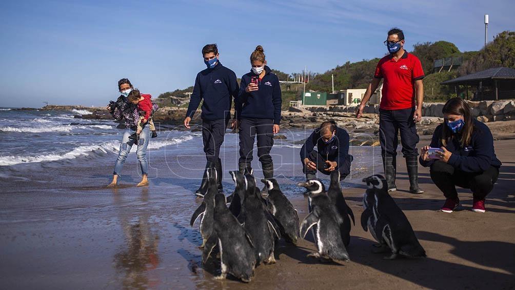 Luego de una recuperación física fueron devueltos al mar.