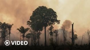La Corte golpea a Bolsonaro: investiga por tráfico de madera a su ministro de Ambiente