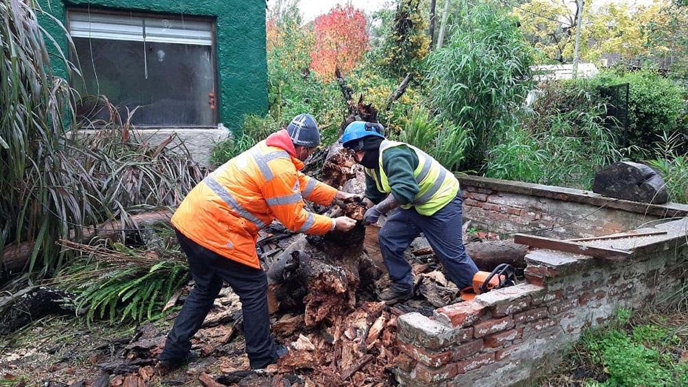 Dos familias tuvieron que autoevacuarse luego de que sus viviendas fueran dañadas por la caída de un árbol en medio del temporal que afecta a Mar del Plata
