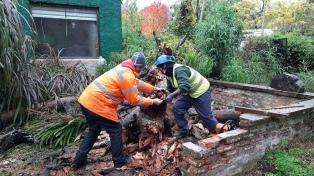 Familias autoevacuadas y árboles caídos por el temporal en Mar del Plata