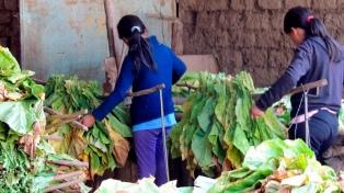 Preparan un sistema de geolocalización del trabajo infantil en el agro bonaerense