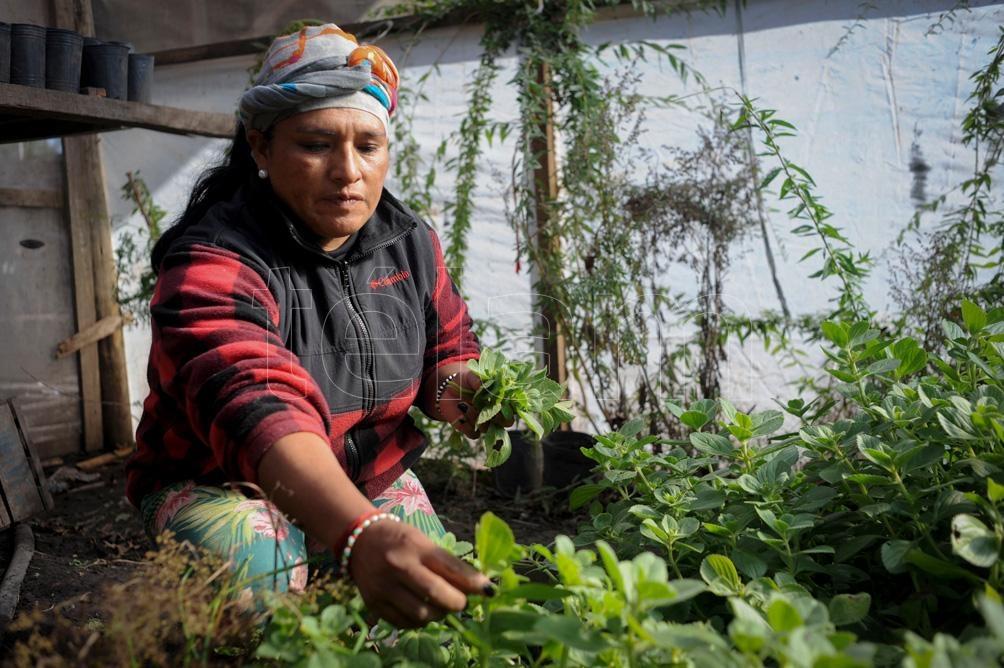 """Desde la inauguración del refugio, en diciembre, ya fueron alojadas """"tres compañeras en situación de violencia. Foto: Eva Cabrera."""