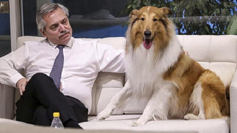 El presidente Alberto Fernández con Dylan, el collie más famoso de la Argentina. Hasta tiene sus propias cuentas en las redes sociales.
