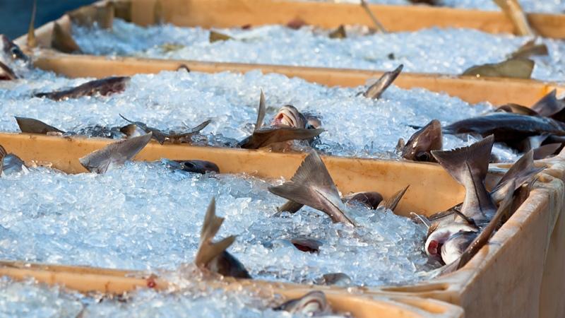 """Realizan un """"pescadazo"""" en el Congreso para visibilizar la problemática del sector"""