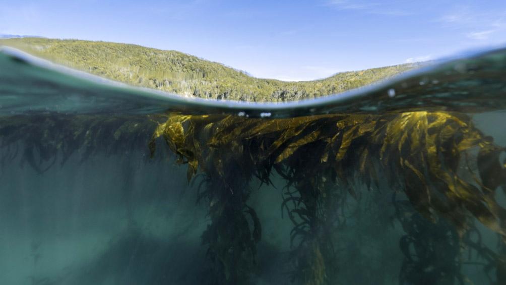 """Estos bosques, """"son responsables de capturar carbono y liberar oxígeno proporcionando gran parte del oxígeno que respiramos""""."""