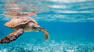 El papel de la ciencia para la conservación de los océanos