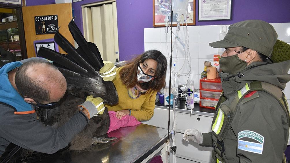 """Un biólogo contó a Télam que """"los análisis dieron bien, el animal no tiene ningún problema""""."""